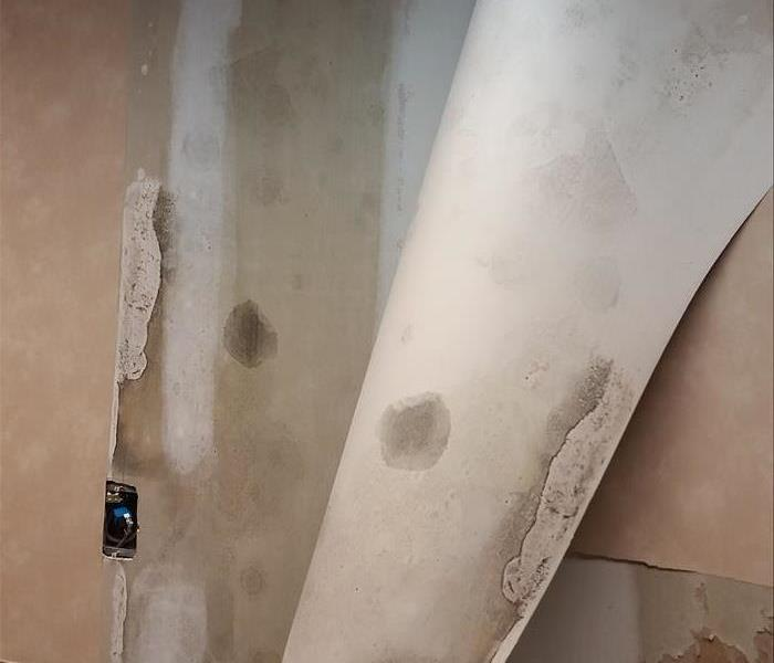 Mold growth in wall.