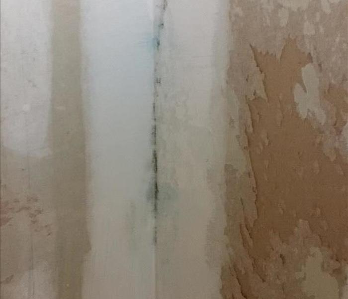 Mold growth in corner of a wall.
