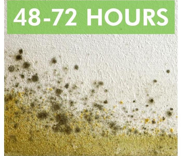Mold growth on a wall. Phrase 48-72 hours